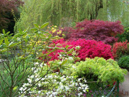 Декоративные растения у себя в саду
